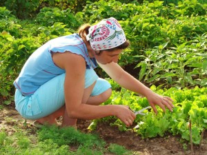 tips for organic gardening