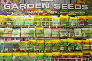 vegetable seeds picture