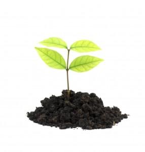 Black Thumb Turn it Green With Five Fabulous Gardening Tips