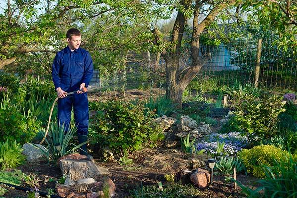gardening illustration photo