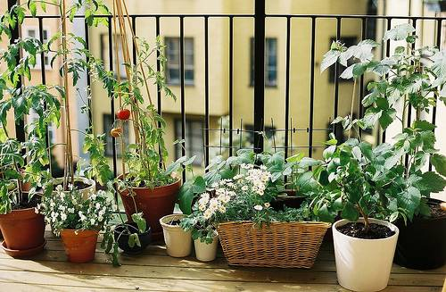 balcony garden for small area kris allen daily. Black Bedroom Furniture Sets. Home Design Ideas